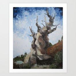 Ancient Bristlecone Pine, Inyo County California  Art Print