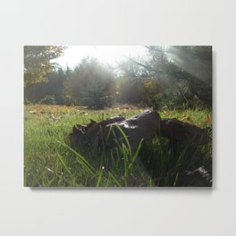 Mushrooms and Sunlight Metal Print