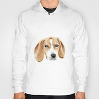 beagle Hoodies featuring beagle by chocomocacino