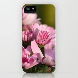 Pink marguerite iPhone Case