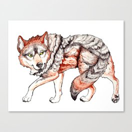Mexican Gray Wolf - Stalk Canvas Print