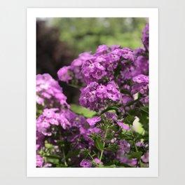 Butterfly Pink Flower in Butchart's Garden Art Print