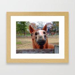 Smiling Horse Framed Art Print