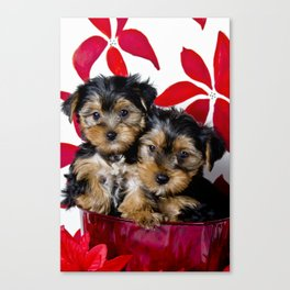 Snuggling Christmas Yorkie Puppies Canvas Print