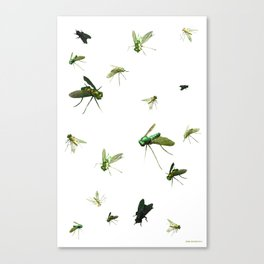 Flies Canvas Print