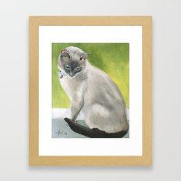 Siamese Cat Portrait Framed Art Print