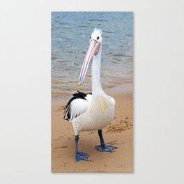 Percy Pelican Canvas Print