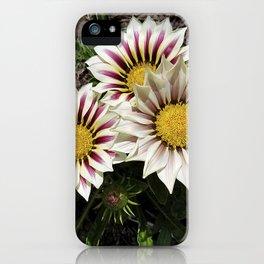 Zany Gazania - red and white stripes iPhone Case