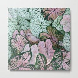 Coleus Leaves Metal Print