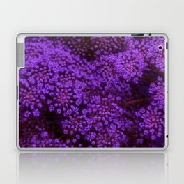 Purple Queen Anne's Lace Landscape Laptop & iPad Skin