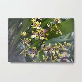 Longwood Gardens Orchid Extravaganza 68 Metal Print