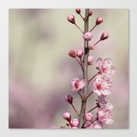 cherry blossom Canvas Prints featuring Cherry Blossom by Zen and Chic