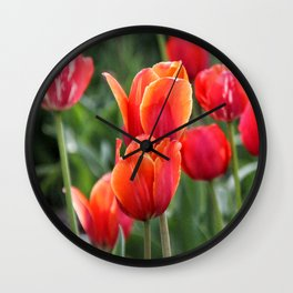 Vivid red and orange tulips - flower power! Wall Clock