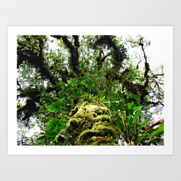 epiphyte tree in a cloud forest Art Print