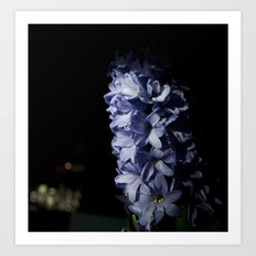 Hyacinth 14 Art Print