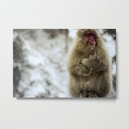 Japanese macaque Snow Monkey Metal Print