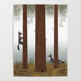 Grey Foxes in the Redwoods Poster