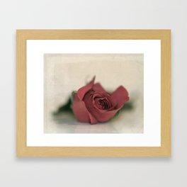 Single Rose fine art photography Framed Art Print