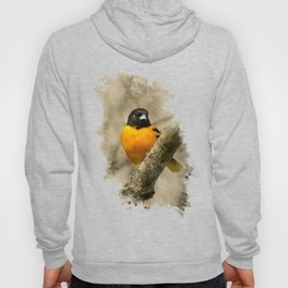Baltimore Oriole Watercolor Painting Hoody