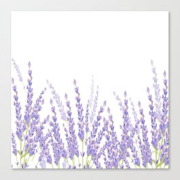 Lavender in the Field Canvas Print