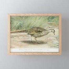 Ring-Necked Pheasant Female (Phasianus Torquatus) illustrated by JL Ridgway (1859-1947) and WB Gille Framed Mini Art Print