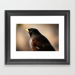 Mynah Framed Art Print