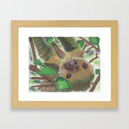 Suzie Sloth Framed Art Print