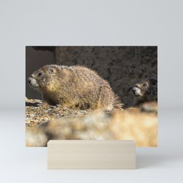 Two Marmots At Smith Rock Mini Art Print