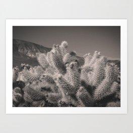 Jumping Cholla Cactus Art Print