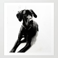 great dane Art Prints featuring Great Dane by Sophie Brown Art