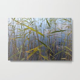 Bed of reeds Metal Print