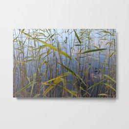 Bed of reeds Metal Print