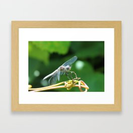 Clearly Invisible Framed Art Print
