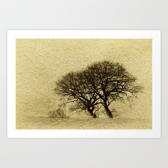 Just Trees Art Print