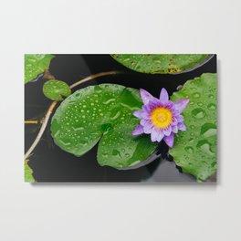 Purple lotus flower Metal Print