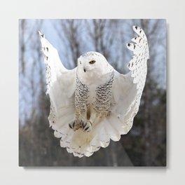 Snowy Owl Air Brakes Metal Print