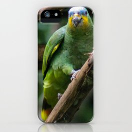 green parrot blue head iPhone Case