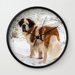 St Bernard dog in the snow Wall Clock