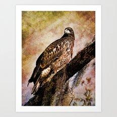 Young Eagle Pose II Art Print