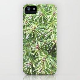 Spring Rain on Spruce Needles iPhone Case