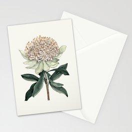Waratah Botanical Stationery Cards
