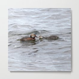 Watercolor Bird, Horned Grebe 03, Lake Myvatn, Iceland Metal Print