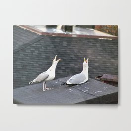 Singing Seagulls in Portland, Maine Metal Print