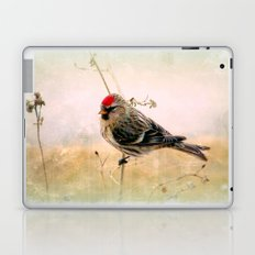 Redpoll Laptop & iPad Skin