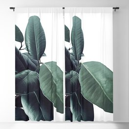 Ficus Elastica #18 #White #foliage #decor #art #society6 Blackout Curtain