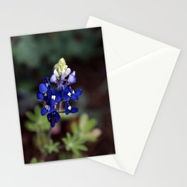 Texas Bluebonnet - Lupinus texensis Stationery Cards
