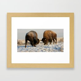 BISON FIGHTING Framed Art Print