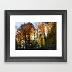 Autumn sunset. Forest Framed Art Print