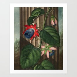 Winged Passion Flowers : Temple of Flora Art Print