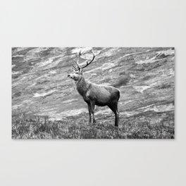 Stag b/w Canvas Print
